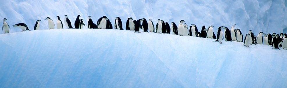 Penguin FX