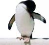 penguin_thumbnail2