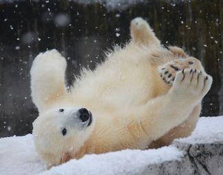 White Bear2